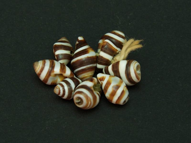African zebra shell beads